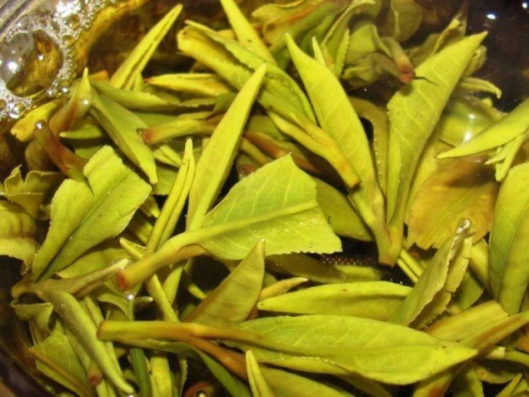 Жёлтый краснодарский чай производства фермера Кульяна.