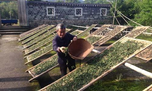 Технологии переработки чая в Китае.